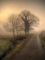 Fog in the morning. by rade32
