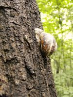 Snail in the park by eclippse