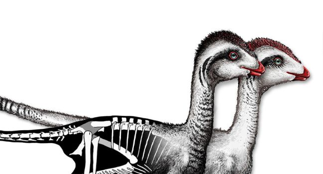 Jinfengopteryx by Lythroversor