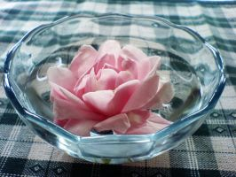 The pink rose in the water by Xercatos