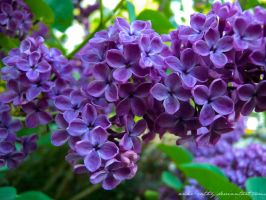 Purple Powers by Anne-Cathy