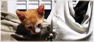 Bag kitten by Nienthorn