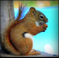 Peaceful Mom Squirrel by JocelyneR