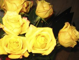 Yellow Roses v2.0 by tdreams-stock