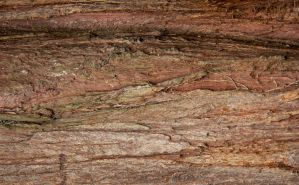 Bark Patterns 03 by RoyalScanners