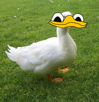 Real Duck Obviously by dylrocks95