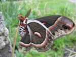 Colorful Moth (5) by Steve-C2