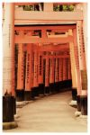 torii time by aus10
