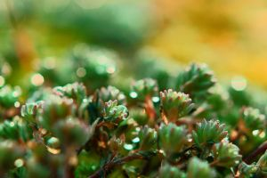 Makro of Small plant 1 by PhotoDragonBird