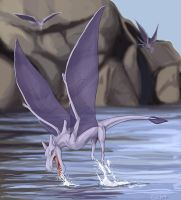 150+ project: aerodactyl by edface