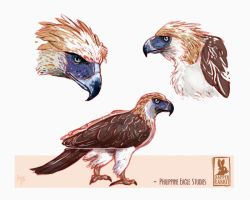 Philippine Eagle Studies by Dapper-Rabbit