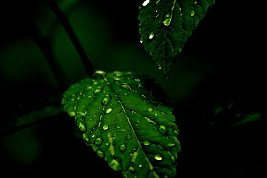 After rain by MarvinOs