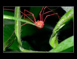 Mr Long Legs by DG-Photo