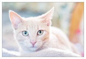 Chico by Blubdi-Photography