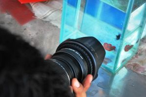 Betta Fish for export 08 by jerungan