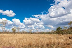 In the Outback...3 by midnightrider79