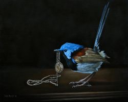 Fairywren study by deRaat