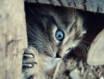 Kitten IV by lilly1921