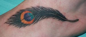 Peacock Feather by Melissa-Capo