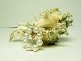 Conch Shell with Pearls Stock3 by D-is-for-Duck