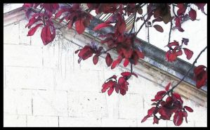 Blood on the leaves... by ansdesign