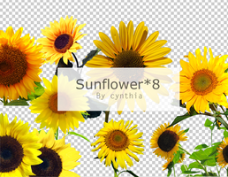 Sunflower Png*8 by CynthiaY
