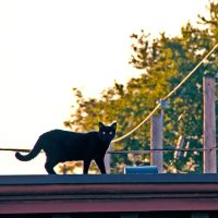 Cat on a Hot Tin Roof by Ennev