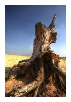 Tree Trunk by Naturegraphic