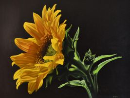 Sunflower by georgeayers2000