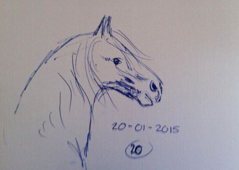 #20 Drawing a horse a day 2015 by Nienke15