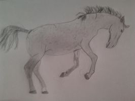 Horse by Rivya