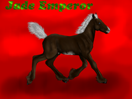 Jade Emperor-foal ref by patchesofheaven74