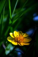 ...pure yellow-ness by LadyLazarus28