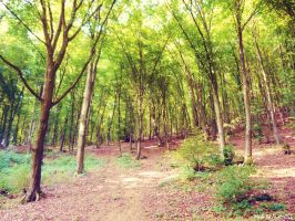 Forest by Iulia-Oprinesc