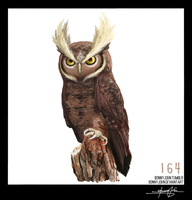 Noctowl!  Pokemon One a Day, Series 2! by BonnyJohn