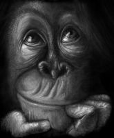 orangutang by Shadows-Ink