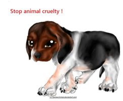 STOP ANIMAL CRUELTY by CanineCriminal