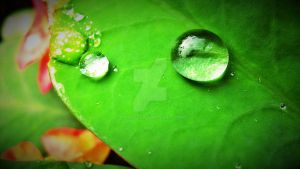Raindrops by phiviet