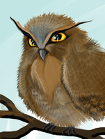 Furry owl by Canfas