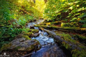 The Mossy Logs of Butler Fork by mjohanson