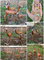 Gerenuk Compilation by MiniZoo