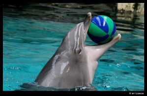 Fav dolphin toy by Lunchi