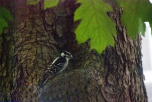 Woodpecker In the Nook by Miss-Tbones