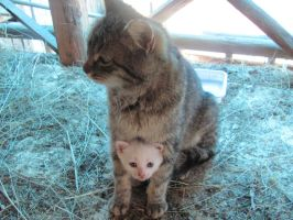 mother and baby cat by child1soul