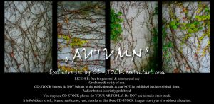 Autumn Exclusive Set by CD-STOCK