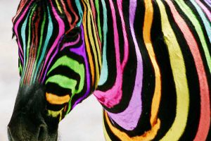 Multi-coloured Zebra by Jonlord999
