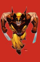 Wolverine by mikebowden