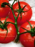 Bright Tomatoes 1 by TonicFeline