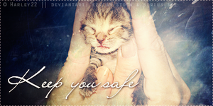 Howrse Banner: Keep you safe little kitty by crystalcleargfx