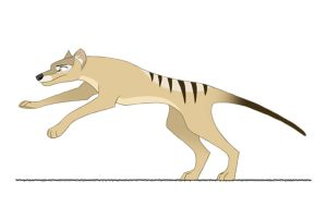 Thylacine run cycle by SarityCreations